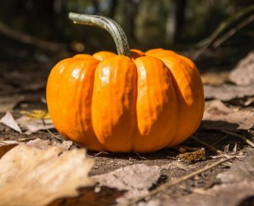 Health benefits of pumpkin and the history of Halloween www.thetonic.co.uk