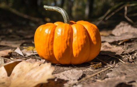 Health benefits of pumpkin and the history of Halloween www.thetonic.co.uk