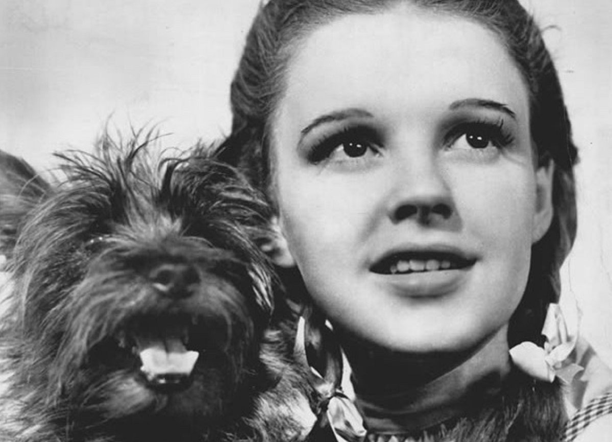 Judy Garland in The Wizard of Oz for The Tonic www.thetonic.co.uk