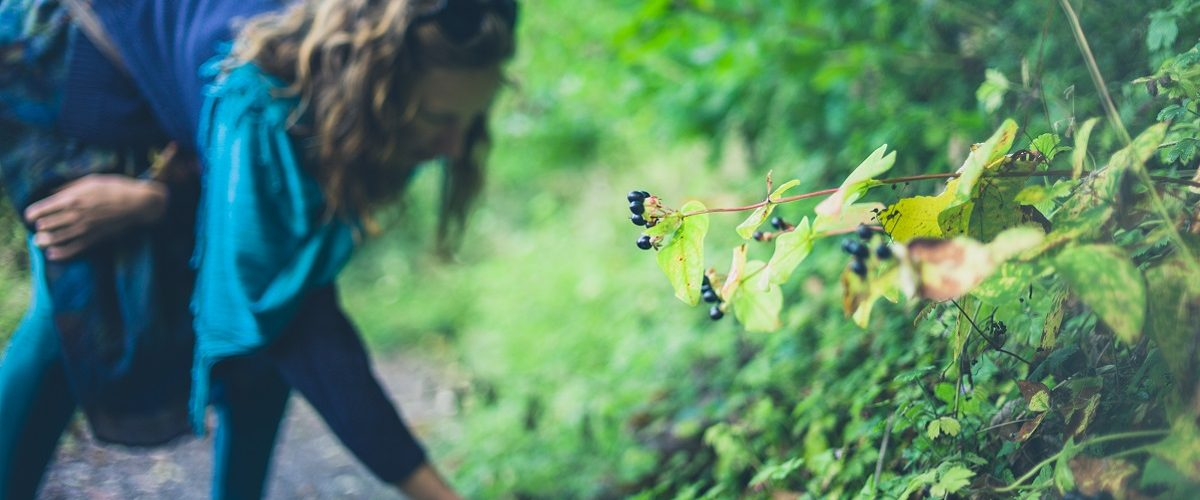 Beginners guide to foraging in summer - The Tonic article www.thetonic.co.uk